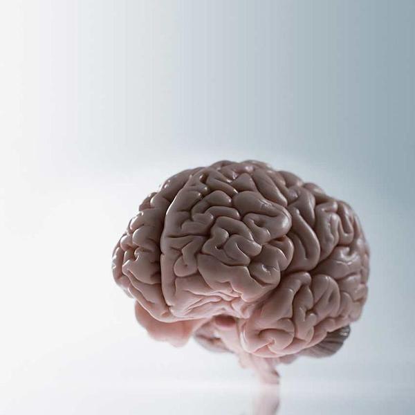 Assim evolui nosso cérebro