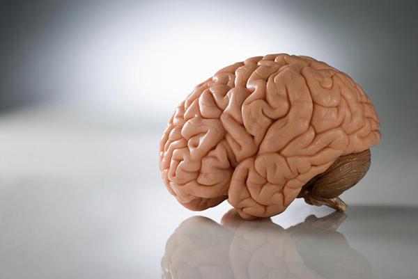 Cérebro 3D para estudar