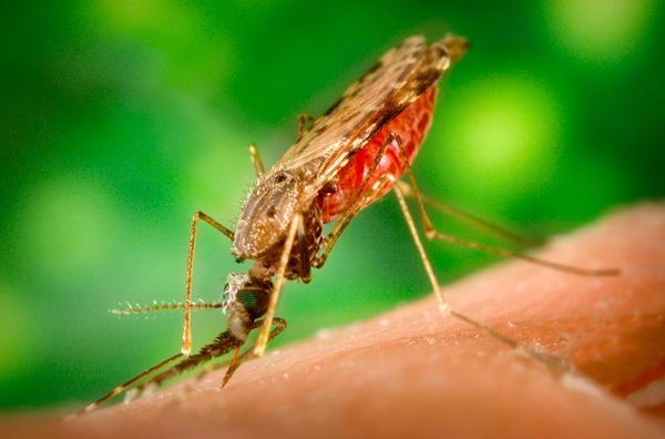 Crise ressuscita a malária