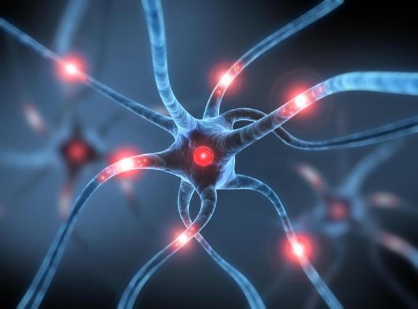 Estão novos neurônios