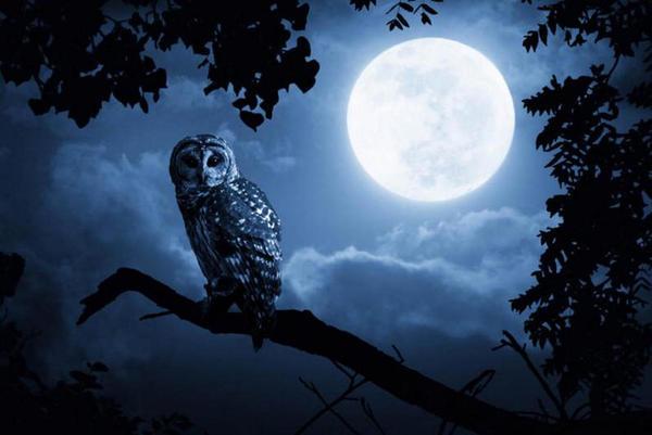 As pessoas com hábitos noturnos têm mais risco de morte prematura