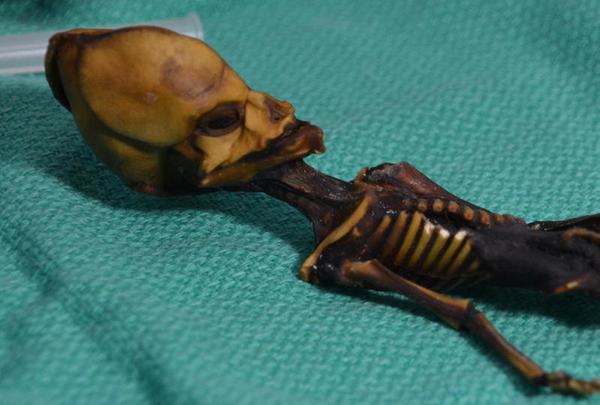 Tenha resolvido o mistério do suposto esqueleto alien de Atacama